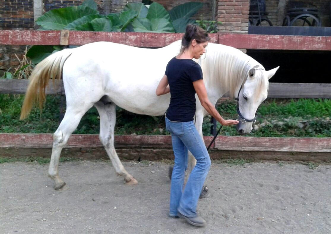 straightness training to supple and balance the horse