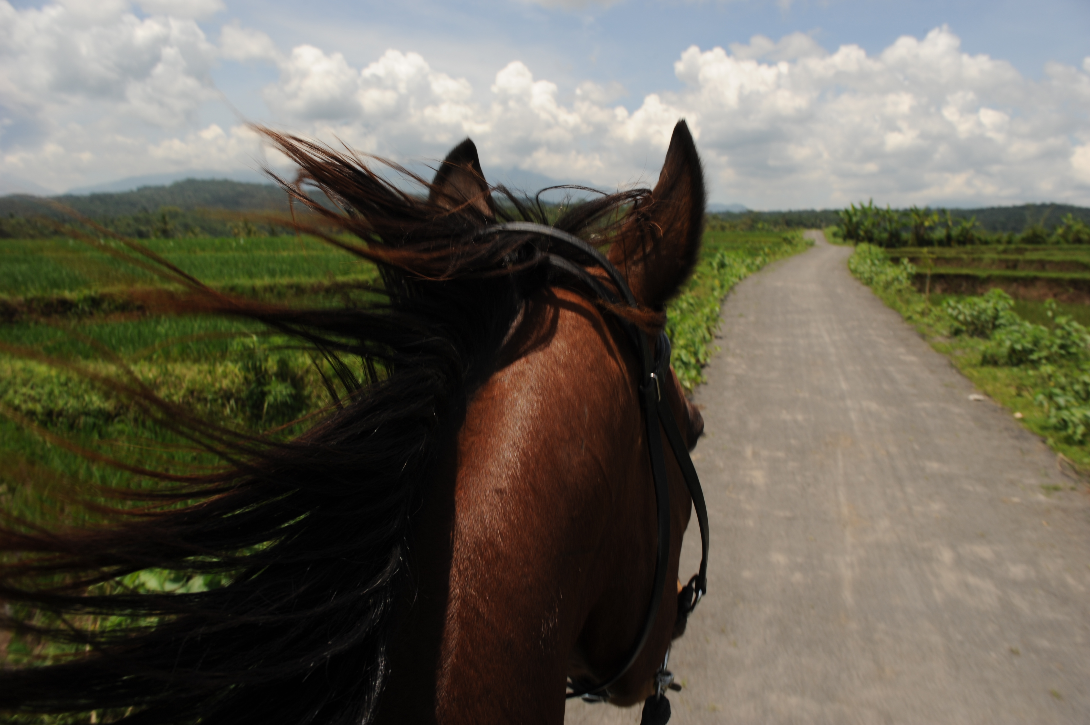 Exciting trail rides on horseback